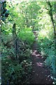 SP0712 : Path climbing into Chedworth Woods by Terry Jacombs