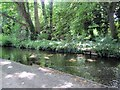 TQ2668 : River Wandle through Morden Hall Park by Paul Gillett