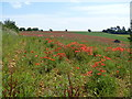 SP0921 : Red field, green field by Michael Dibb