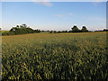 TL2261 : Field by Gallow Brook by Hugh Venables