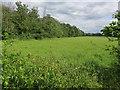 TL2254 : Weaveley Wood by Hugh Venables