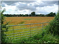 SU3966 : Farmland on the edge of Kintbury by Simon Mortimer