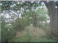 SE6115 : Footpath along Barrier Bank by Jonathan Thacker