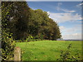 SY2296 : Parehayne Hill Plantation by Derek Harper