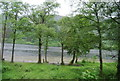NN5812 : Trees on the shore of Loch Lubnaig by Nigel Chadwick