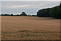 TQ4865 : Towards Chelsfield Church   by Ian Capper