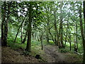 SK3452 : Woodland hillside footpath, Crich Chase by Andrew Hill