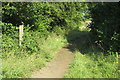 SP9342 : Boundary Walk by the corner of Chapelclose spinney by Philip Jeffrey