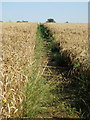 SP9342 : MK Boundary Walk towards Wharley End by Philip Jeffrey