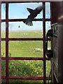 NF7862 : Baleshare: a bird trapped in a phone box by Chris Downer
