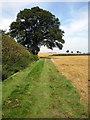 SP9536 : Oak tree by the path to Ridgmont station by Philip Jeffrey