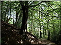 SK3083 : Limb Valley footpath through the trees by Andrew Hill