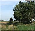 TF1904 : Barnoak Road (track) by JThomas