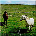 Q8558 : Loop Head Peninsula - Two Horses in Field by Suzanne Mischyshyn
