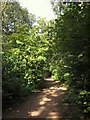 SO8754 : Path in Nunnery Wood by Derek Harper
