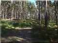 SU8765 : Gravel Hill ridge by Alan Hunt