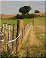 SJ8930 : Fence, Bank View Farm by Derek Harper