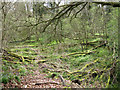 SP2086 : Derelict wet woodland, Bannerly Pool by Robin Stott