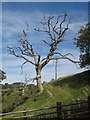 SH8104 : Dead tree near Gwastadgoed Farm by Derek Harper