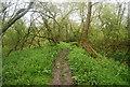 TQ0316 : Muddy Wey South Path by N Chadwick