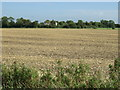 TL0959 : Farmland off St Neots Road by JThomas