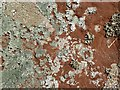 NT6876 : Lichen on Easter Broomhouse Standing Stone by Walter Baxter