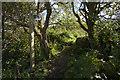 SW4029 : Footpath to Caer Bran by Elizabeth Scott
