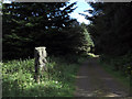 NY9755 : Forest road with sculpture in Slaley Forest by Trevor Littlewood