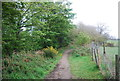 TQ0318 : Wey South Path by N Chadwick