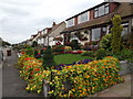 NJ9203 : Leggart Terrace in Bloom by Colin Smith