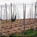 TQ8028 : Cleared hop field at Hoad's Farm by Oast House Archive