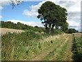SU8094 : Track to Fillingdon Farm by don cload