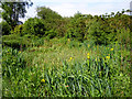 TQ4395 : Small pond, Roding Valley Meadows by Robin Webster
