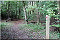 SP7832 : Path through the woods by Philip Jeffrey