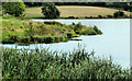 J1041 : Reeds, Loughbrickland lake by Albert Bridge