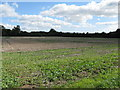SU9006 : Stubble field off Meadow Way Tangmere by Dave Spicer