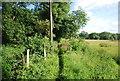 TQ0338 : Wey South Path by N Chadwick