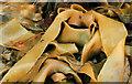 J4181 : Seaweed, Cultra (2) : Week 40