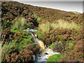 SE0766 : Small Waterfall on Tributary of Hazel Gill by Chris Heaton