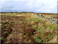 SE0965 : Walls between Caygill Moss and Jack Hole Head by Chris Heaton
