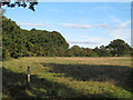 TL4101 : Hay meadow near Brookmeadow Wood by Roger Jones