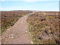SS8940 : Track to Dunkery Beacon by Roger Cornfoot