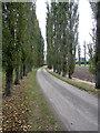 SP7735 : Tree lined drive to Potash Farm by Philip Jeffrey