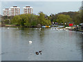 TQ5286 : Lake, Harrow Lodge Park by Robin Webster