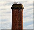 J1785 : Former mill chimney, Muckamore (2) by Albert Bridge