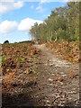 SP9229 : Path up Rammamere Heath by Philip Jeffrey