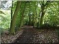 SP9008 : Path in Black Wood by Rob Farrow