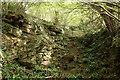 ST7966 : Exposed stone in the woodland by Doug Lee