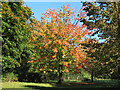 TQ3449 : Autumnal tree near South Park by Stephen Craven