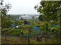 SK3771 : Allotments with gasometers by Peter Barr